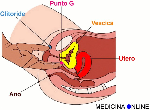 MEDICINA ONLINE PUNTO G G POINT SEX SESSO VAGINA PARETE ANTERIORE ANO MASSAGGIO TANTRA VULVA CLITORIDE STIMOLAZIONE VIDEO TOCCARE PREMERE DONNA WALLPAPER HI RES PICTURE IMAGE
