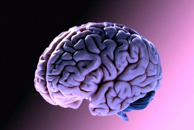 Dott. Loiacono Emilio Alessio Medico Chirurgo Medicina Chirurgia Estetica Benessere Dietologia Sessuologia Ecografie Tabagismo Smettere di fumare Mangiare meno ringiovanisce il tuo cervello2