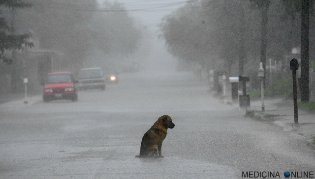 MEDICINA ONLINE DOG ALONE IN THE RAIN STREET CANE DA SOLO SOTTO LA PIOGGIA DEPRESSIONE SOLITUDINE SINDROME DA ABBANDONO COSA E COME SI CURA CONSIGLI AIUTO SUICIDIO MADRE GENITORI FIGLI