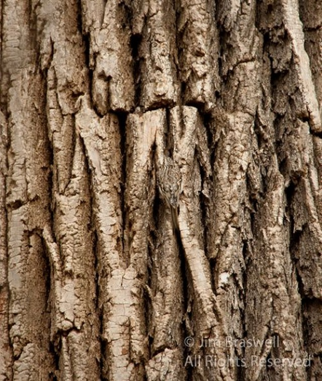 nature-camoflauge-28