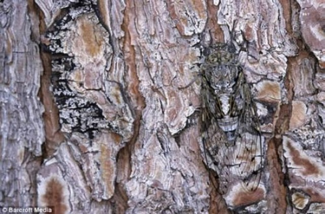 nature-camoflauge-3