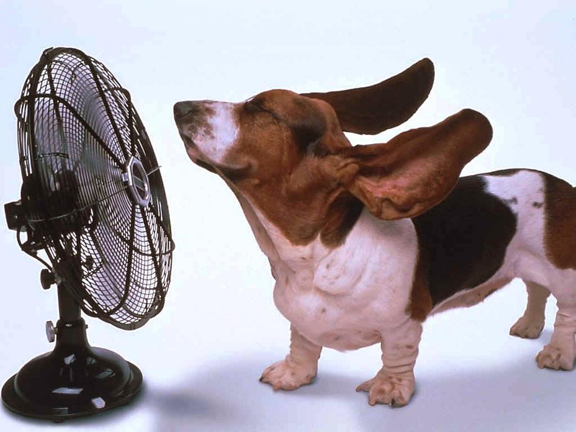 Rinfrescare Casa Fai Da Te rinfrescare la casa senza climatizzatori evitando bollette