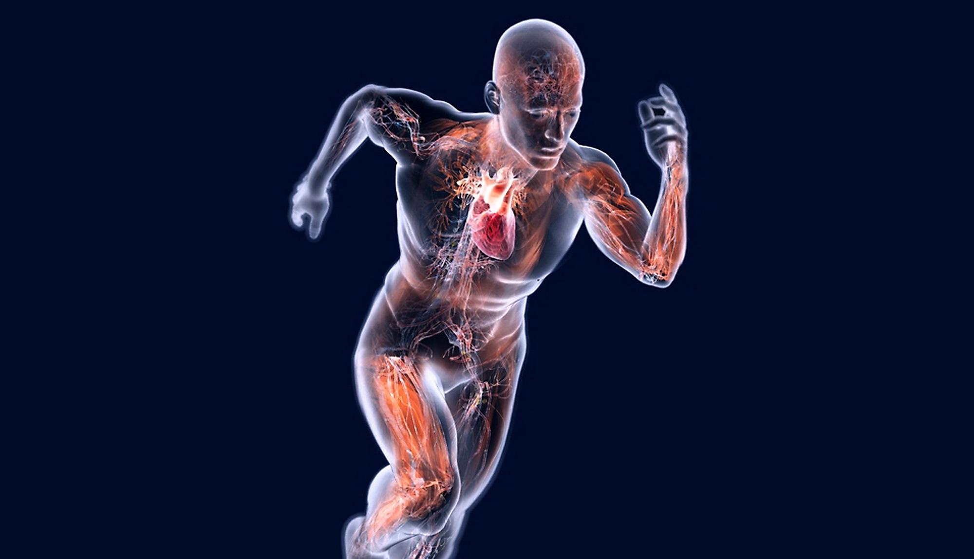 I varicosity di gambe esercitano il trattamento
