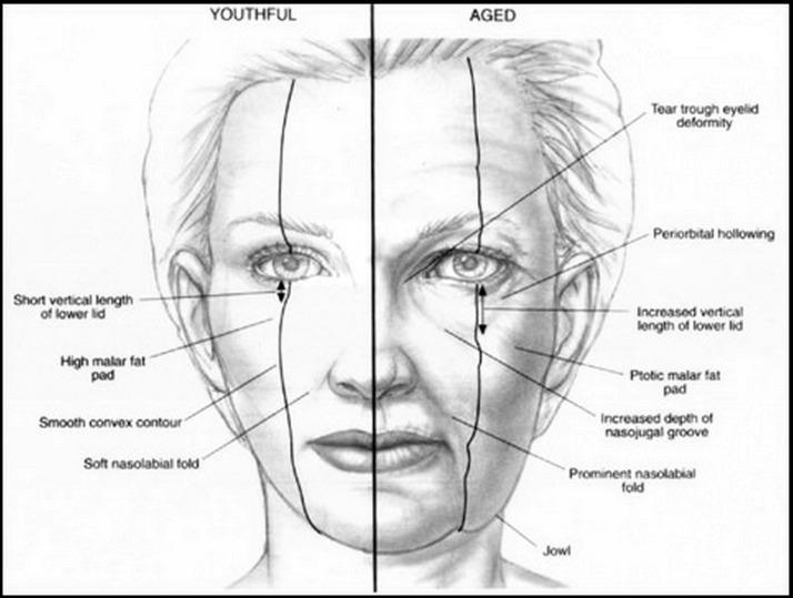 Le rassegne di una faccia imballano risposte skinlayt
