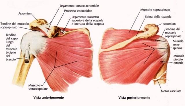 MEDICINA ONLINE Dott Emilio Alessio Loiacono Medico Chirurgo Roma ROTTURA CUFFIA  ROTATORI SPALLA Riabilitazione Nutrizionista Medicina c0f9228fb6fb