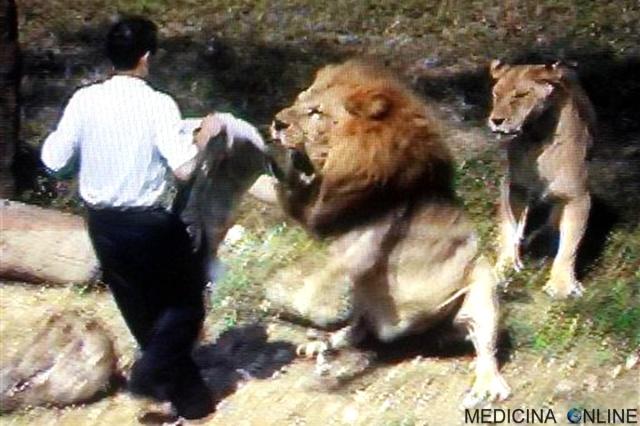 MEDICINA ONLINE predicatore parla con gli animali attaccato dai leoni man attacked by lion.jpg