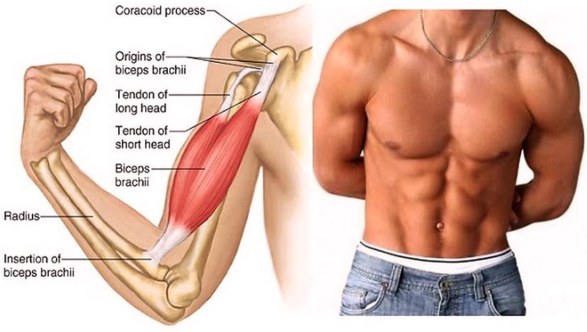 dieta sana per contrassegnare i muscoli