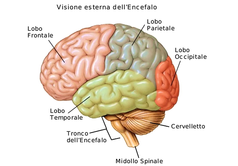 epilessia e impotenza