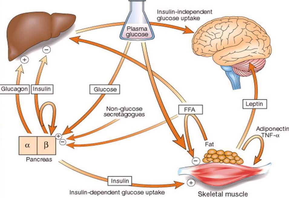 glicemia leggermente alta cause