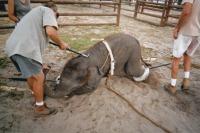 medicina-online-dott-emilio-alessio-loiacono-medico-chirurgo-roma-animali-elefanti-circo-tortura-basta-riabilitazione-nutrizionista-infrarossi-accompagno-commissioni-cavitazione-radiofrequenza-ecograf