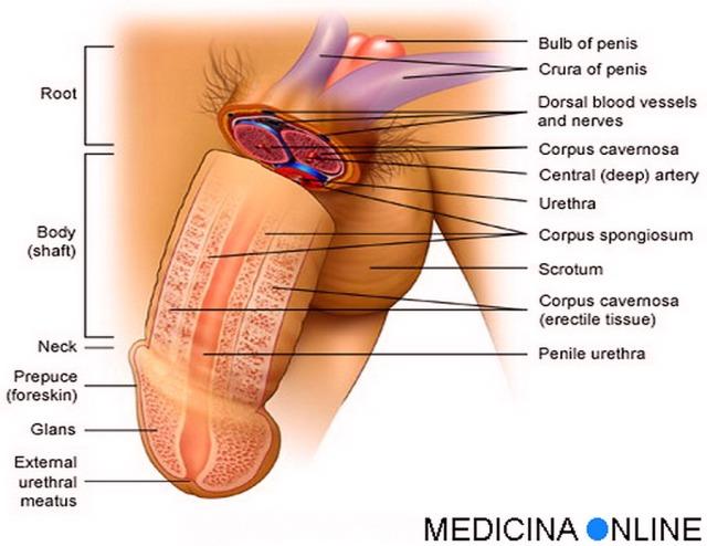 Operazioni di una frattura di pene