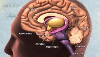 erezione e ghiandola pituitaria