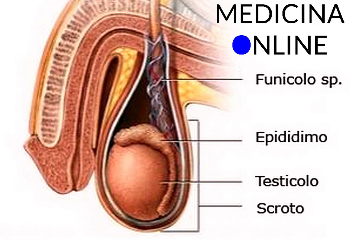 penetrazione anatomia