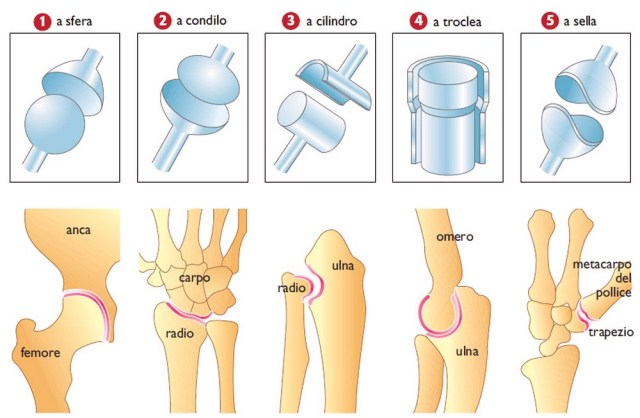 La differenza tra artrite reumatoide e artrite reumatoide