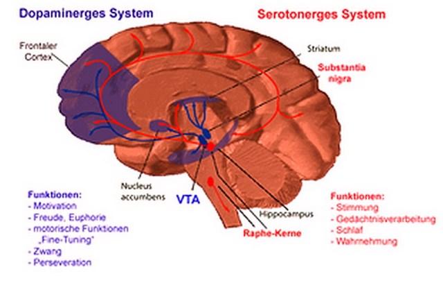 medicina-online-dott-emilio-alessio-loiacono-medico-chirurgo-roma-sistema-dopamminegico-dopammina-circuiti-riabilitazione-nutrizionista-infrarossi-accompagno-commissioni-cavitazione-radiofrequenza-eco