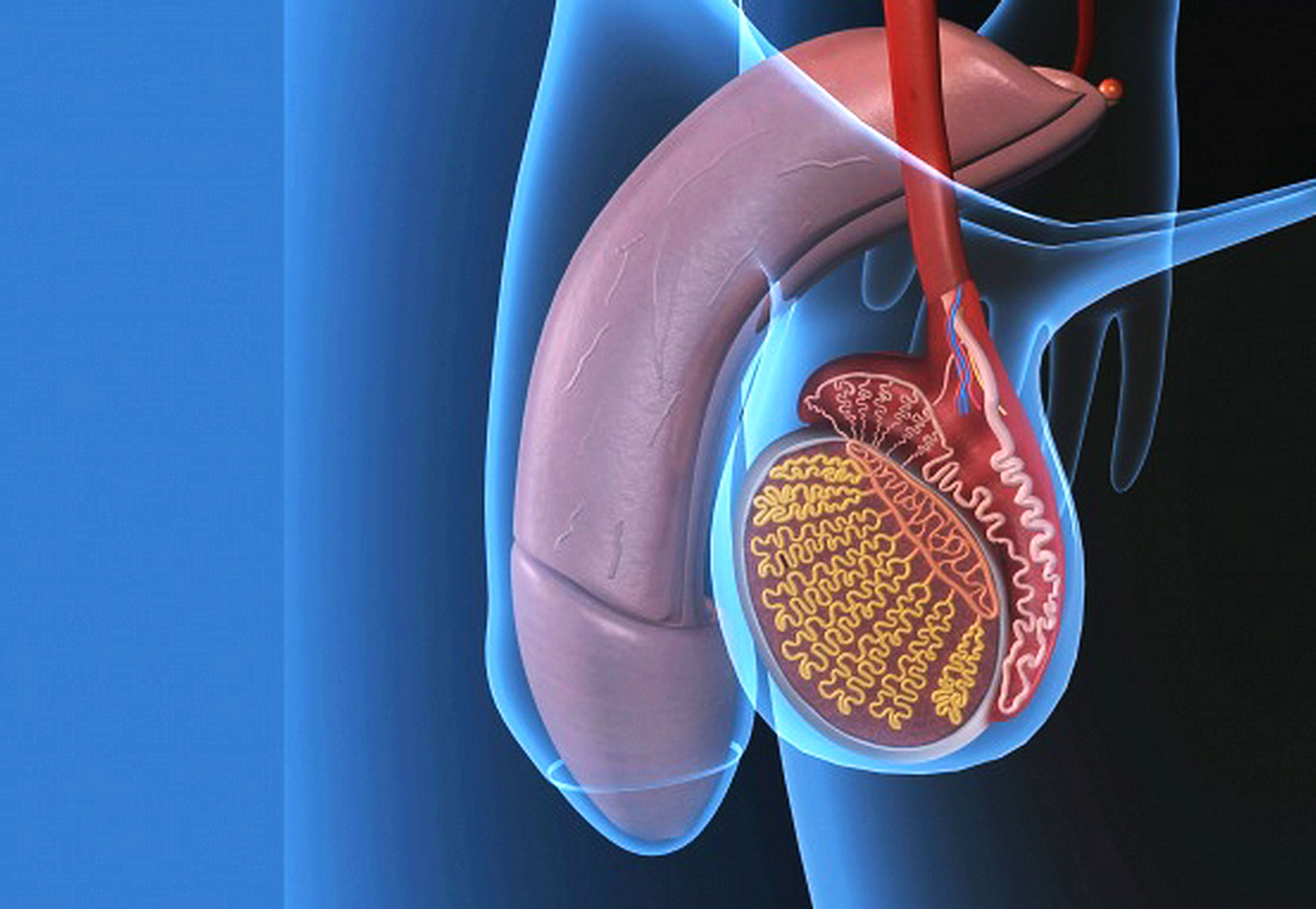ingrandimento del pene con acido ialuronico