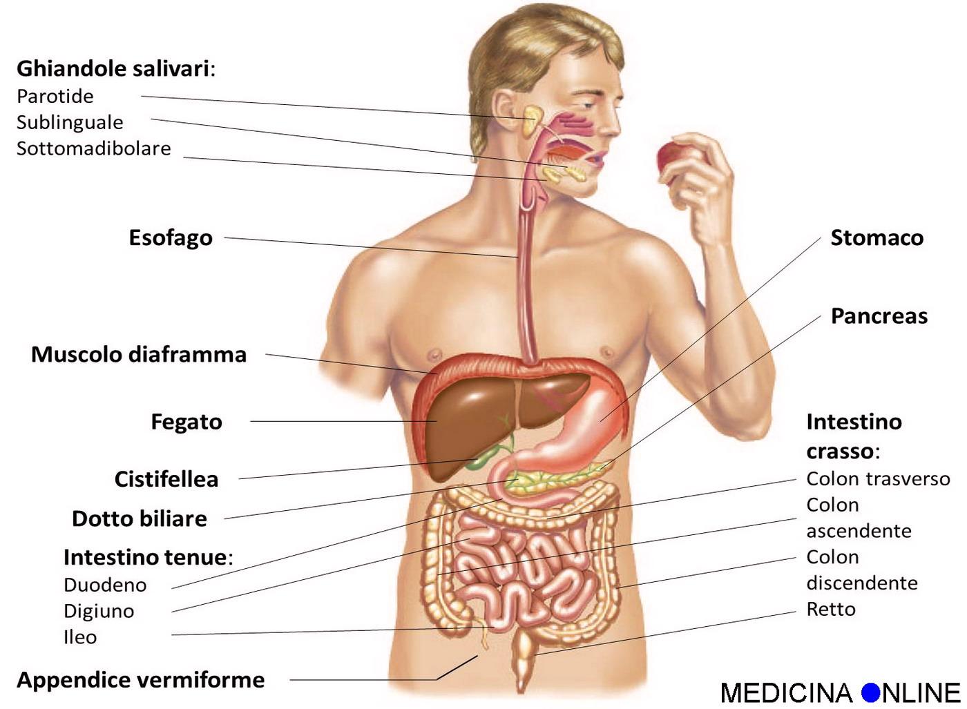 problemi alla ghiandola prostatica e allintestino