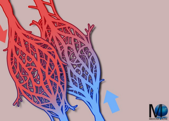 MEDICINA ONLINE capillare sangue vasi glomeroulo renale PROSTATA GLANDE VESCICOLE SEMINALI URETERI URETERE DIFFERENZA URINA PENE VAGINA ORIFIZIO TUMORI TUMORE CANCRO DIAGNOSI ECOGRAFIA UOMO DONNA