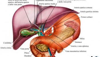 cura naturale ulcera peptica