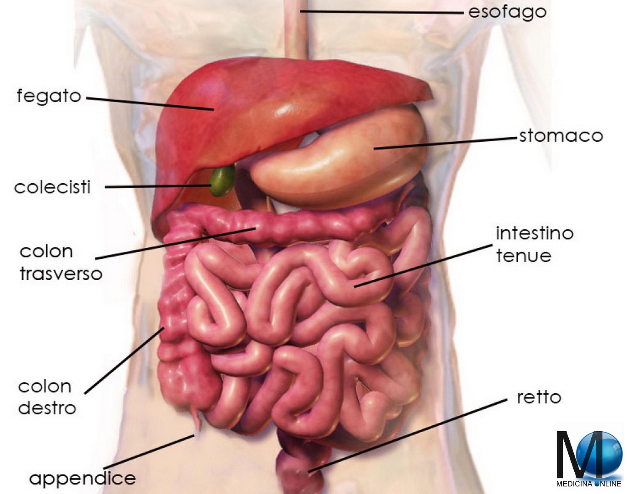alimentazione post operazione tumore colon