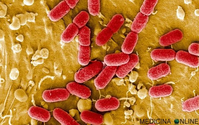 MEDICINA ONLINE INVASIVITA VIRUS BATTERI FUNGHI PATOGENI MICROBIOLOGIA MICROORGANISMI CLINICA BIOLOGICA BIOLOGIA MICROBI LABORATORIO ANALISI PARETE INFEZIONE ORGANISMO PATOGENESI MICROBIOLOGY WALLPAPER DNA