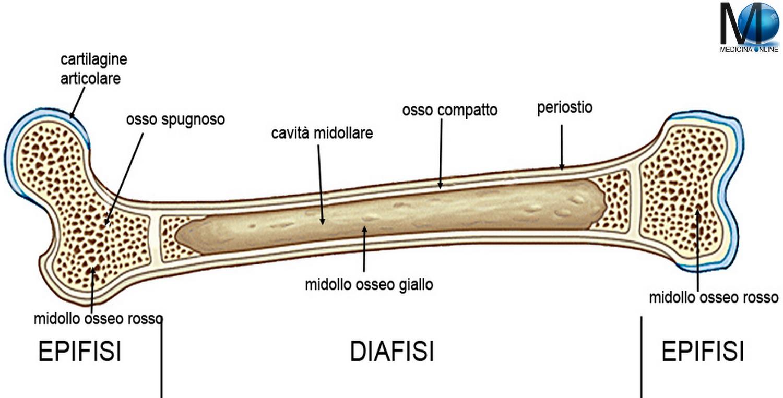 cosa vuol dire prostata fibrosale