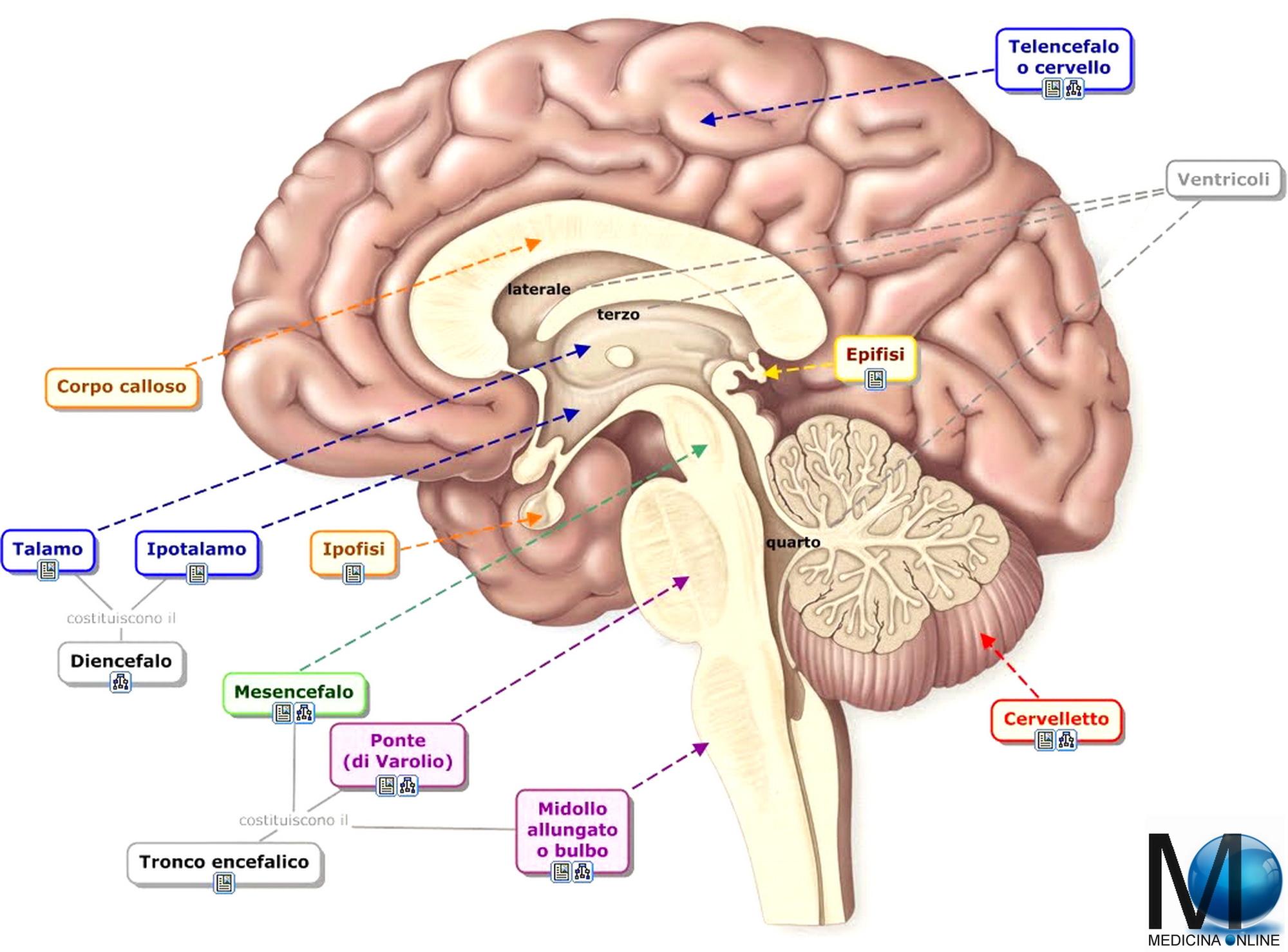 disfunzione erettile dovuta a lesioni del midollo spinale