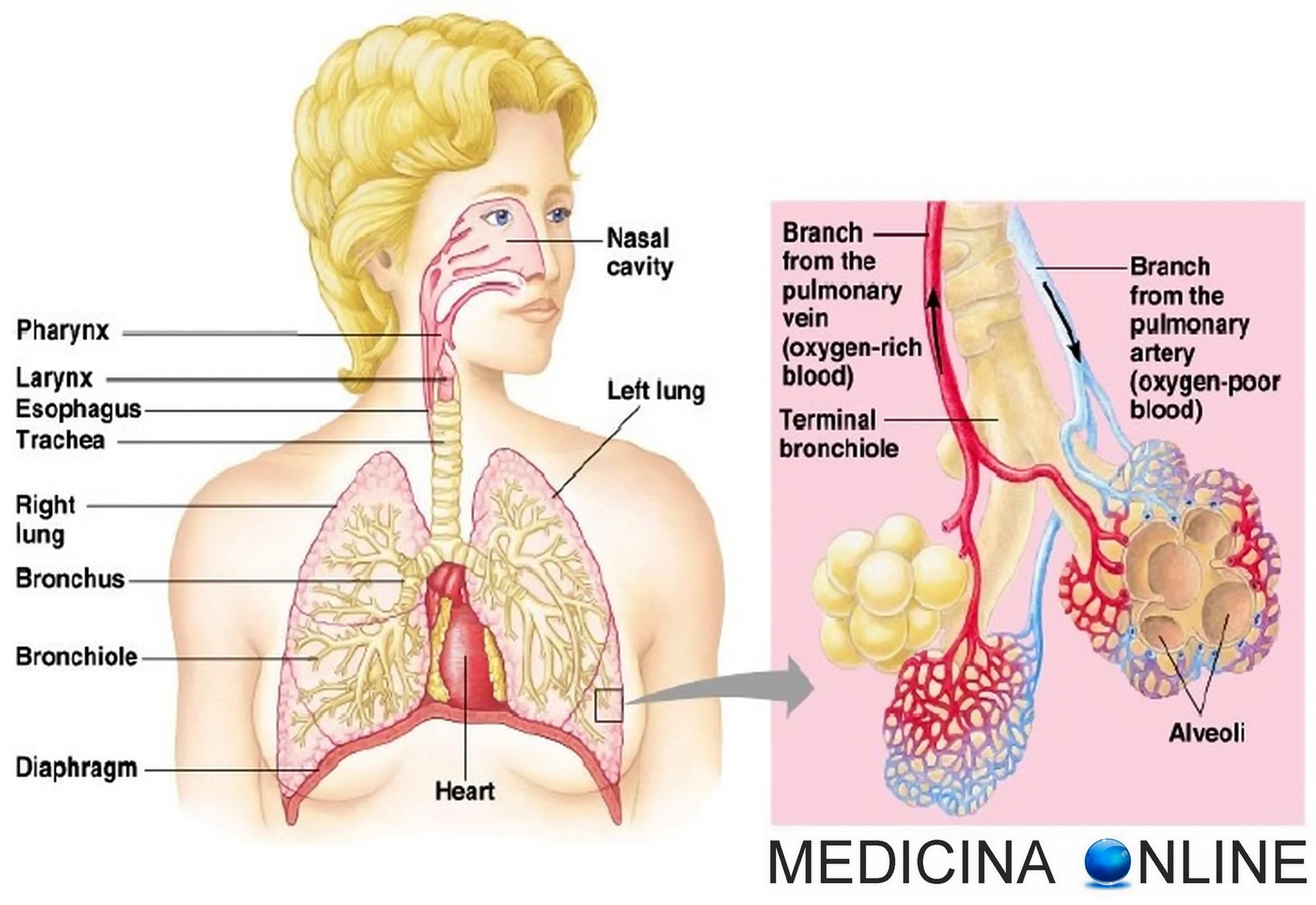 tumore al polmone stadio terminale