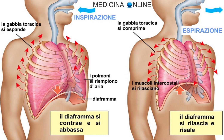 erezione e respirazione