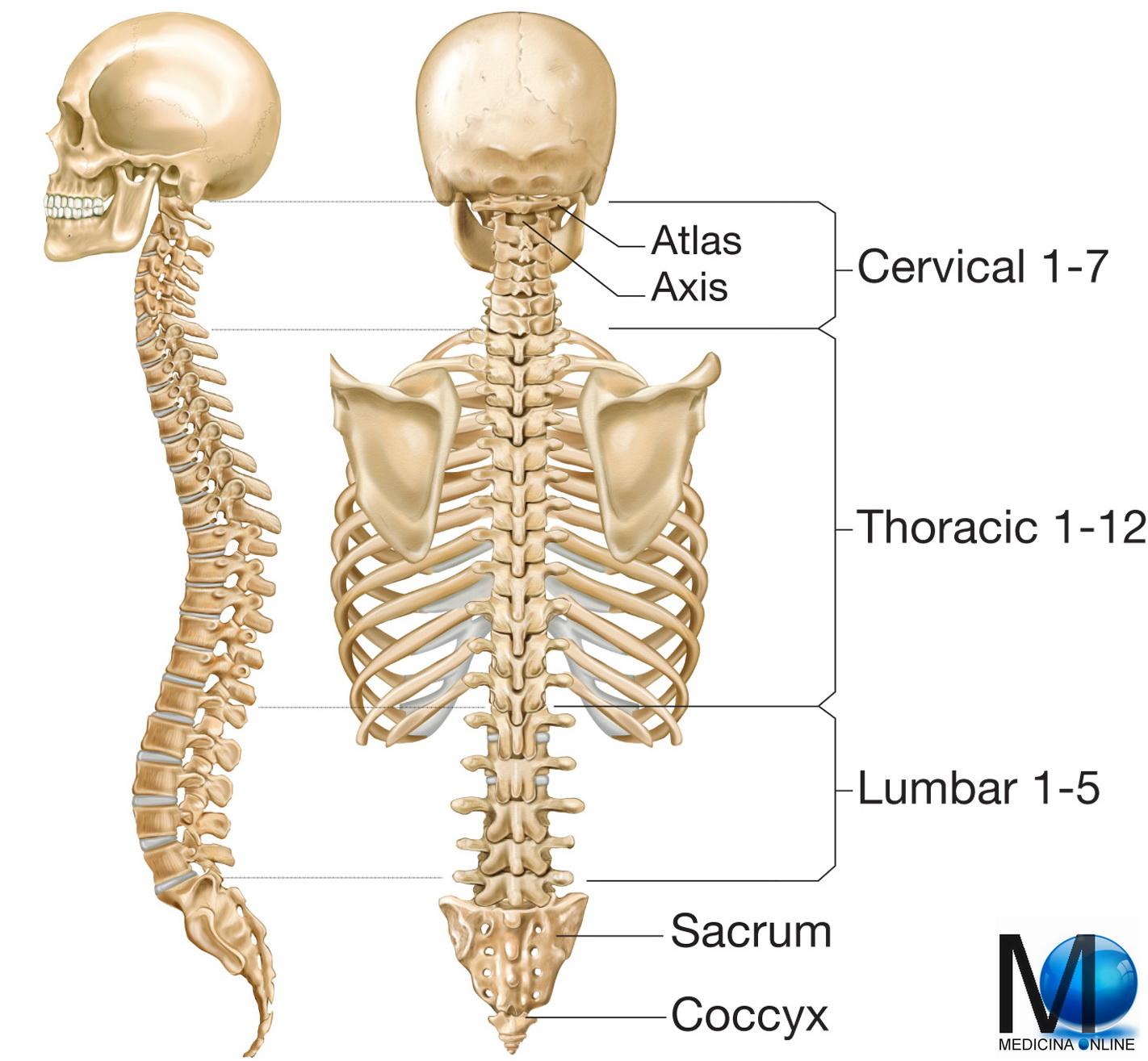 La sindrome della colonna vertebrale toracica