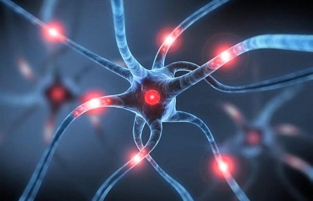 MEDICINA ONLINE SINAPSI SISTEMA NERVOSO ACETILCOLINA NORADRENALINA DOPAMINA NEUROTRASMETTITORI CERVELLO SISTEMA NERVOSO AUTONOMO CENTRALE SIMPATICO PARASIMPATICO NEURONI GLIA CERVELLETTO SNC ORMONI