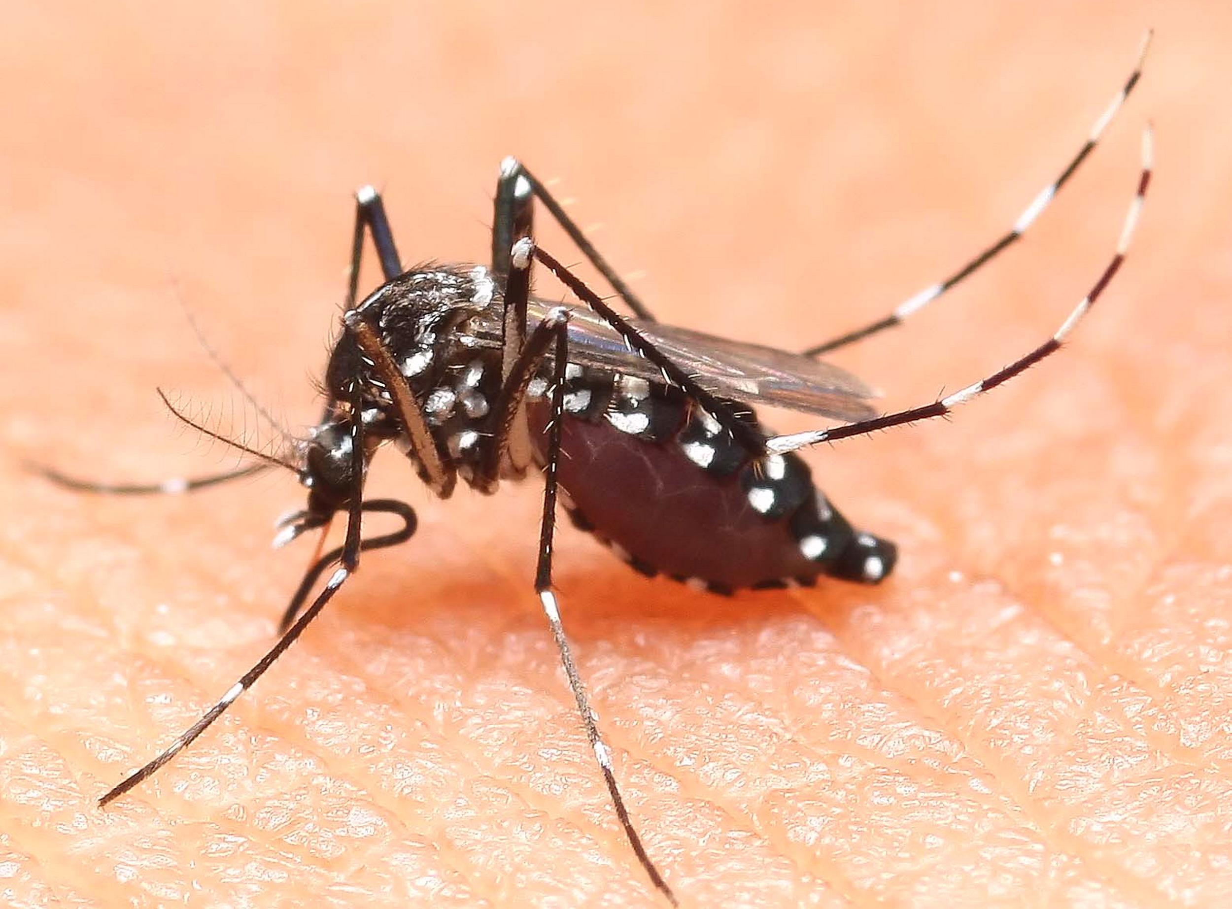 Febbre gialla, dengue ed altre malattie trasmesse dalle