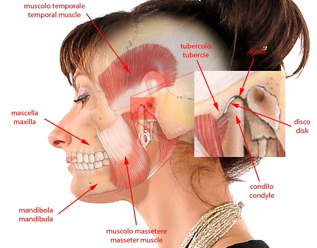 la tensione mandibolare