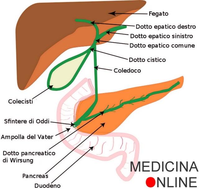 MEDICINA ONLINE BILE DOTTO EPATICO COMUNE CISTICO COLEDOCO CISTIFELLEA COLECISTI FEGATO DIGESTIONE ANATOMIA SCHEMA SISTEMA BILIARE SINTESI IMMAGINE