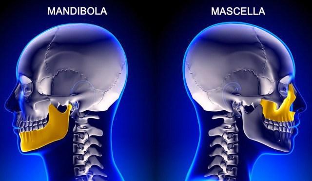 MEDICINA ONLINE DIFFERENZA MASCELLA MANDIBOLA OSSA CRANIO MASCELLONE ATM ARTICOLAZIONE TEMPOR MANDIBOLARE MANGIARE PARLARE BOCCA DENTI.jpg