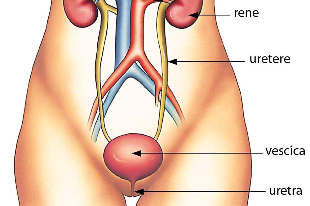 prostata e sgocciolamento del pene