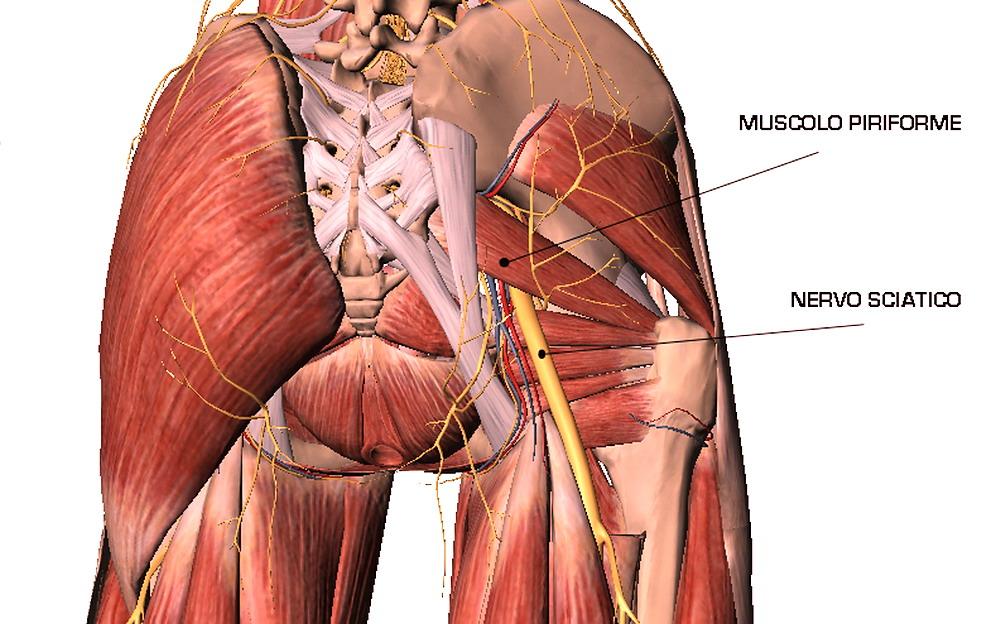 Muscolo con grande pene