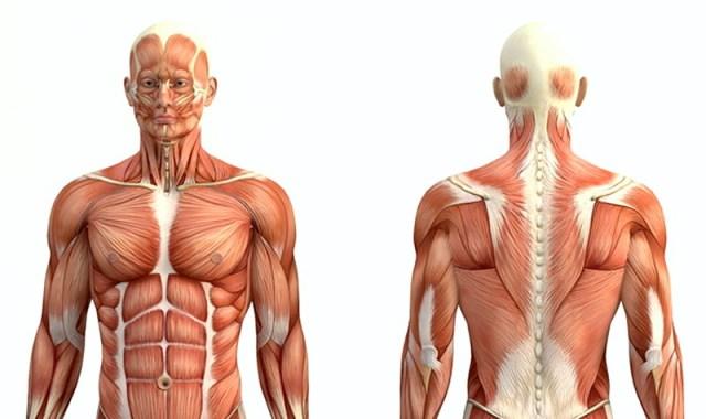 MEDICINA ONLINE MUSCOLI DIFFERENZA DISTROFIA MUSCOLARE DUCHENNE BECKER SISTEMA NERVOSO DISTROFINA GENE GENETICA MALATTIA MORBO