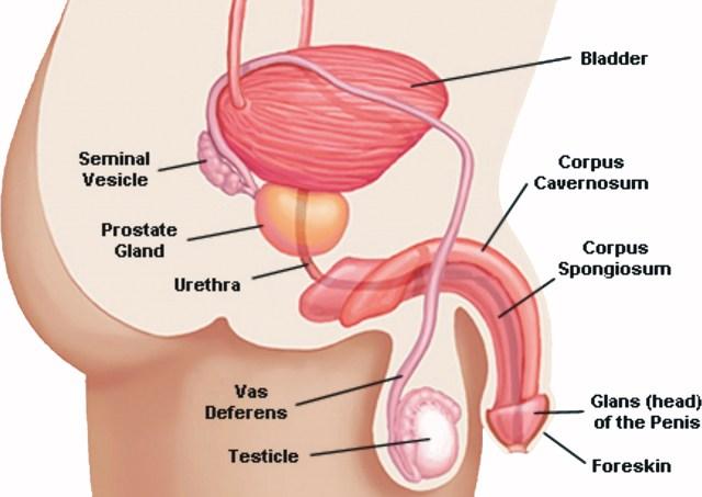 come i medici controllano i peni negli uomini