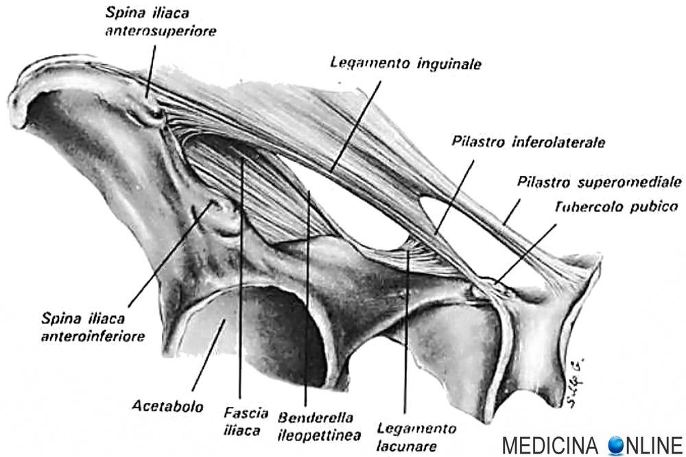 Legamento ileo-pettineo di Cooper (Benderella ileopettinea ...