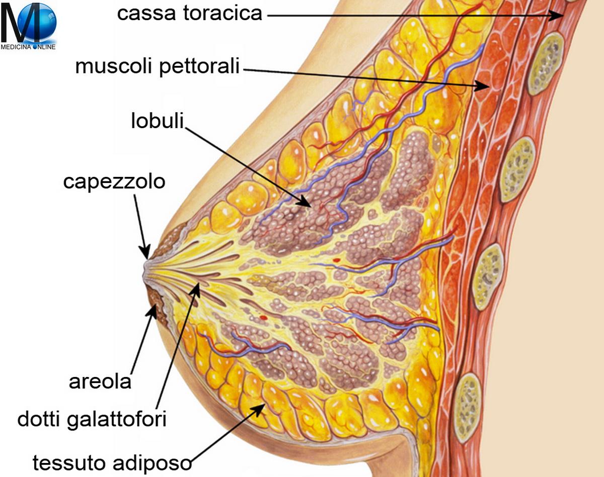minzione frequente del seno dolorante