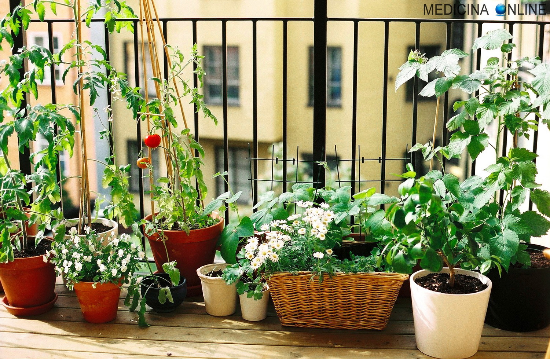 Come Far Morire Una Pianta pianta avocado: potatura, esposizione, temperatura
