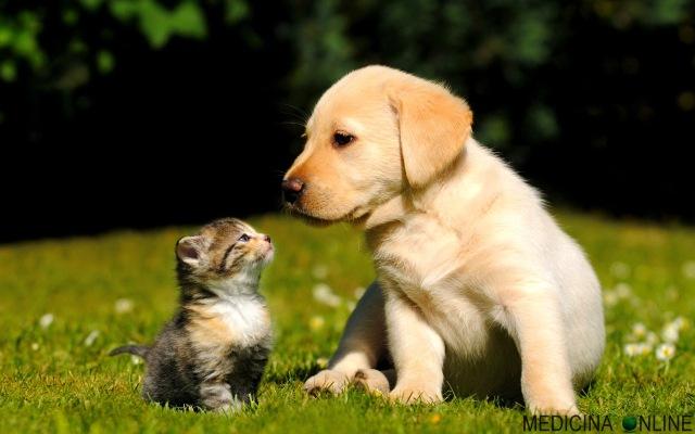 E Più Intelligente Il Cane O Il Gatto Una Ricerca Ha La Risposta