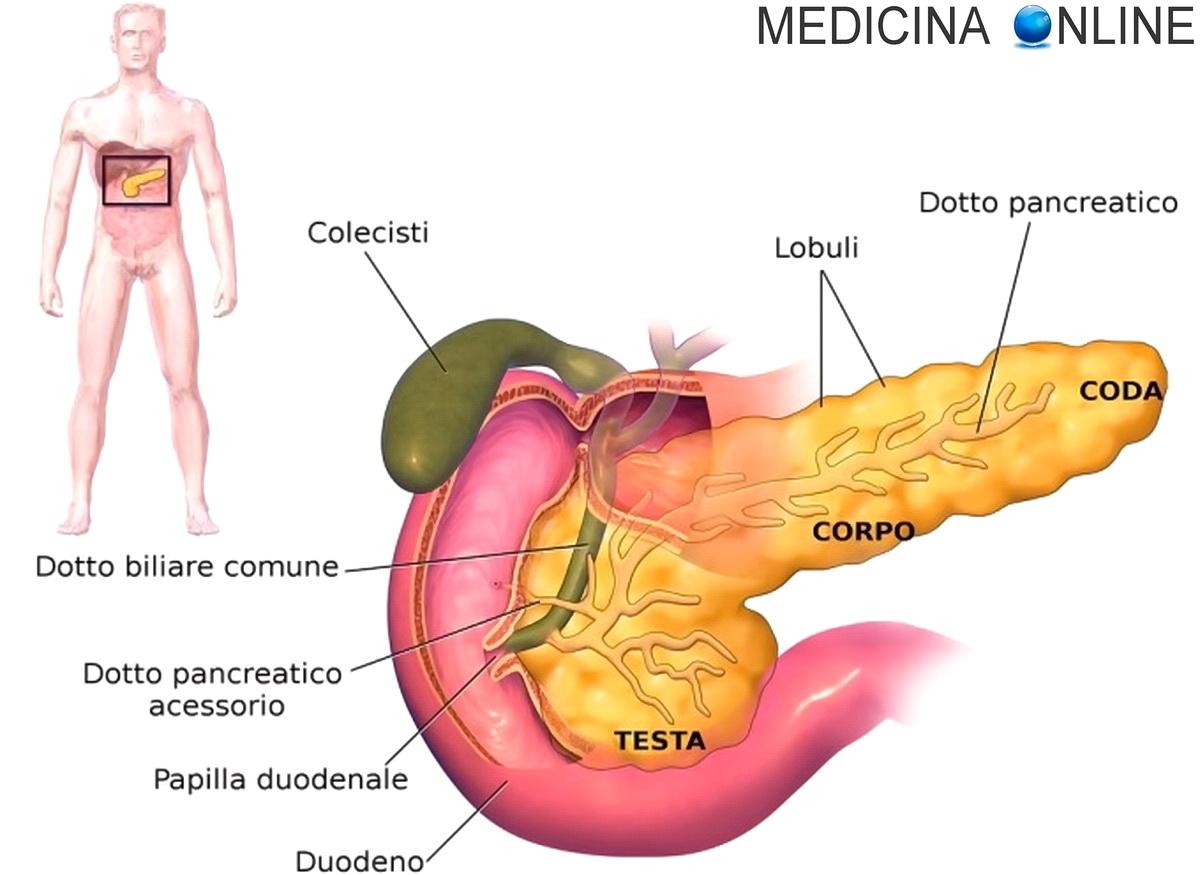 tumore prostata sopravvivenza furata senza cure 3