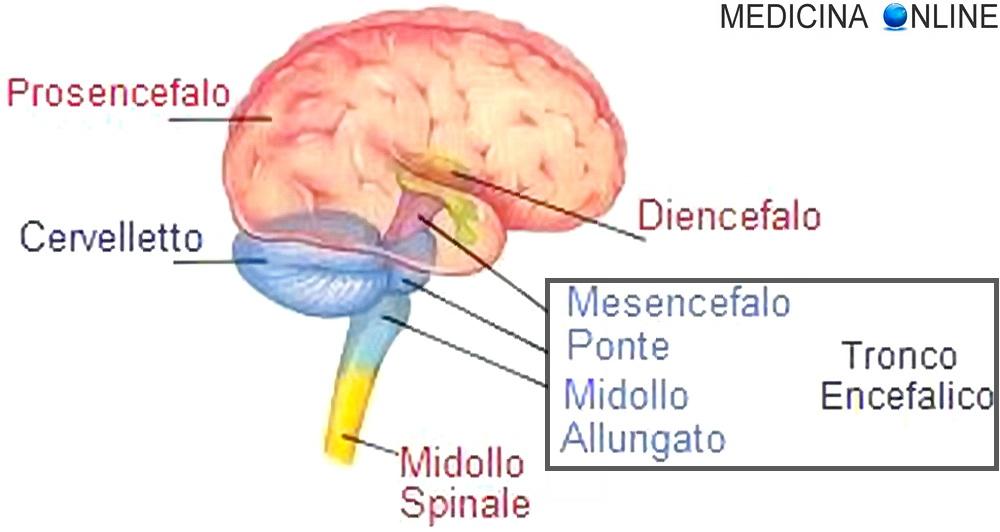 Vistoso Tronco Encefálico Anatomía Mri Regalo - Anatomía de Las ...