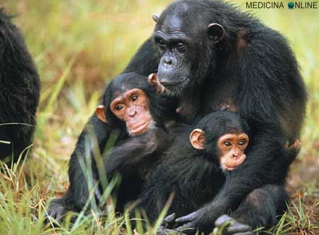 MEDICINA ONLINE STORIA scimmia essere umano Homo sapiens mondo preistoria primati progresso scientifico scienza scimpanzè tecnologia Terra uomo uomo preistorico.jpg