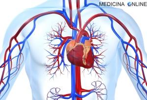 MEDICINA ONLINE CUORE SANGUE AORTA VENA CAVA INFERIORE ANALISI ANATOMIA ARTERIE VENE CAPILLARI PRESSIONE IPERTENSIONE UMANO FISIOLOGIA PROLASSO MITRALE VALVOLE CARDIACHE CIRCOLAZIONE SISTEMICA POLMONARE