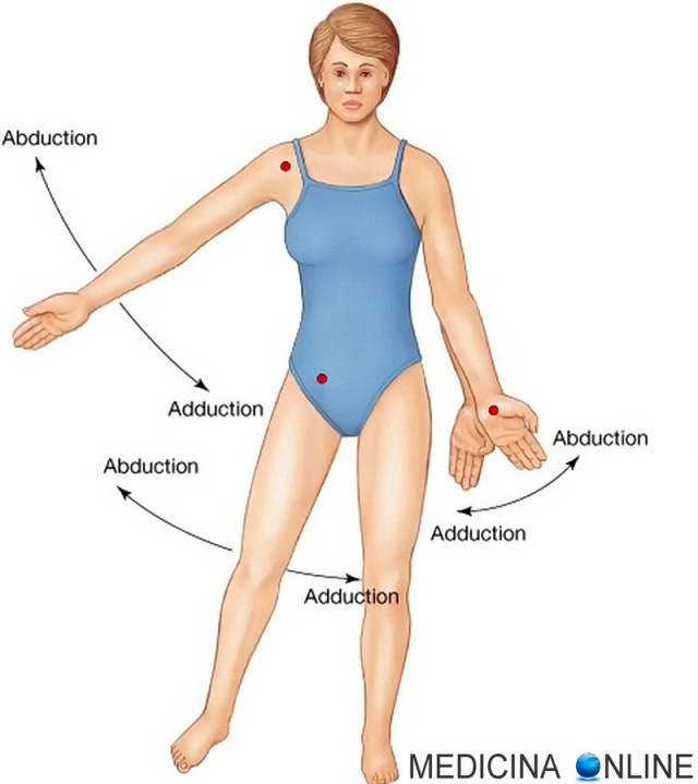 MEDICINA ONLINE DIFFERENZA MUSCOLI ADDUTTORI ABDUTTORI MOVIMENTI ABDUZIONE ADDUZIONE Difference Between Abduction and Adduction.jpg