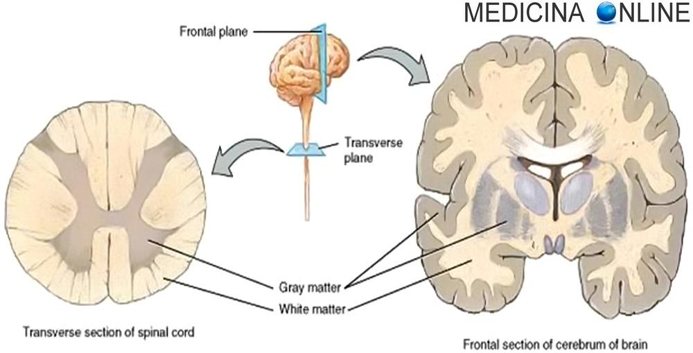 asportazione della prostata attraversando il colonna