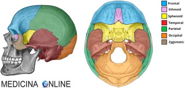 MEDICINA ONLINE SFENOIDE 3D ROTAZIONE ANIMATA Rotation sphenoid bone CRANIO OSSO OSSA TESTA ANATOMIA UMANA POSIZIONE RAPPORTI VICINO DOVE SI TROVA NASO SCHELETRO ASSILE MANDIBOLA MASCELLA.jpg